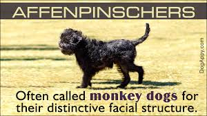 Non Shedding Dogs Small To Medium by Small Hypoallergenic Dogs