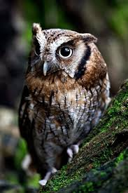 250 Best Images About Owl Love You Always On Pinterest | Beautiful ... 3716 Best All About Owls Images On Pinterest Barn Owls Nature Winter Birding Guide Lake Champlain Region 53 Flight At Night Owl Species Farm House England Stock Photos Images 1538 Owls Photos Beautiful Birds 2552 Give A Hoot Children Large White Carraig Donn Mayo Sghilliard Glass Studio Little Opens In Westport Food Drink Nnecticutmagcom 250 Love You Always