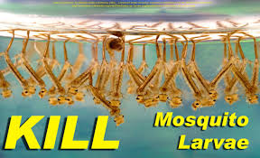 NEW! - Kill Mosquito Larvae Naturally With This Weird Trick ... How To Remove Mosquitoes From Your Backyard Youtube 25 Unique Mosquito Spray Ideas On Pinterest Natural Mosquito Keep Mosquitoes Out Of Your Yard For A Month And Longer With Ways Repel Accidentally Green To Get Rid Of Bugs In Backyard Enjoy Bbq Picture With Gnats In The House Kitchen Plants Organically 9 Steps Pictures Best Sprays Insect Cop 27 Banish From Next Barbecue Roaches Fleas Ants Repelling Plants Plant Citronella Lemongrass