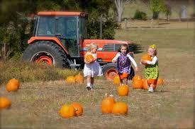 Pumpkin Patch Farms Nashville Tn by Fall Field Trip Falcon Ridge Farm
