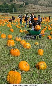 Pumpkin Fest Half Moon Bay by Half Moon Bay California Stock Photos U0026 Half Moon Bay California