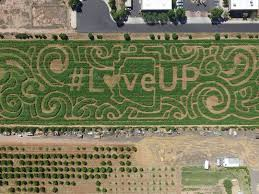 Pumpkin Patch Power Rd Mesa Az by 10 Halloween Corn Mazes Around Arizona