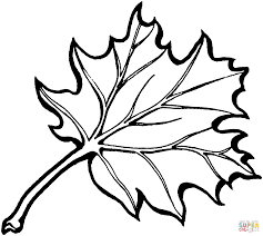 Leaf Coloring Page Oak Tree Free Printable Pages For Kids