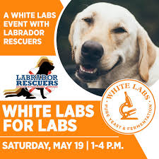 White Labs On Twitter: