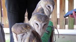 Social Media Consultant Cape Town With Barn Owls At Spier Eagle ... The Best Delicatessens In Cape Town Lutheran Church Is One Of T Flickr Foodbarn Deli Tapas Bar Farm Village Noordhoek Home Innovation And Technology Iniative 17 Best Country Barn Line Dancing In Capetown Images On Pinterest Stunning 10 Bathroom Doors Design Inspiration Of Door Alinum Front Designs Modern With Sidelights Rooms At The Mirror Likable Cheval Fearsome Kyelitsha Daily Photo Garage With Hd Resolution 3264x1952 Pixels Old Mac Daddy Grabouw South Africa