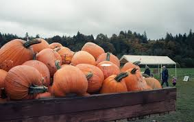 Pumpkin Patch Hayrides Lancaster Pa by Guide To Pumpkin Picking In Pennsylvania I Love Halloween