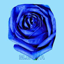 100 Atelier M Belle Grande Demoiselle Bleu By EGVA