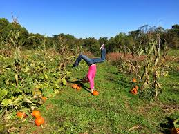 Myers Pumpkin Patch Facebook by Traveling Handstands October 2014