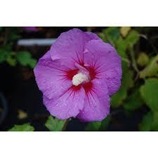 Colorful Shade Tolerant Plants Shade Garden Pinterest Plants
