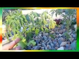 Alternative Gardening Hydroponics Aquaponics Backyard Food