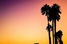 California Beaches Palm Trees Wallpaper Inspirational Hd A Silhouette Of On Venice