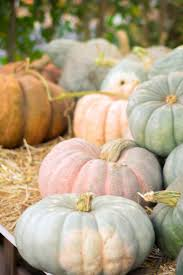 Pumpkin Patch North Austin Tx by 33 Best California Images On Pinterest