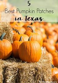 Pumpkin Patch Austin Tx 2015 by 5 Best Pumpkin Patches In Texas You Have To Visit This Fall