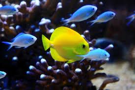 grand aquarium de malo grand aquarium de malo tourisme rennes les environs de