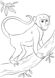 Monkeys Coloring Pages