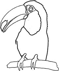 Toucan on the Tree coloring page