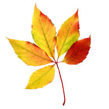 Foliage clipart fall leaves 10