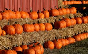 Kent City Pumpkin Patch by Fall In New England 8 Destinations You Must Visit