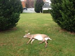 Found This Deer Sleeping In My Backyard - Imgur My Backyard Garden Nation Of Islam Ministry Agriculture Super Groovy Delicious Bite Big Lizard In My Back Yard Erosion Under Soil Backyard Ask An Expert I Think Found Magic Mushrooms Wot Do This Video Is Hella Clickbait Youtube Dinosaur Storyboard By 100142802 Holes In The Best Home Design Ideas Cottage Months Ive Been Creating More Garden Rooms Cat Frances Aggarwal Backyards Terrific Rocks And Minerals Tree Growing Started Fruiting Can Someone Id