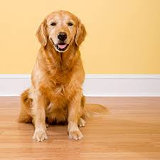 how to dog proof your hardwood floors canadian living