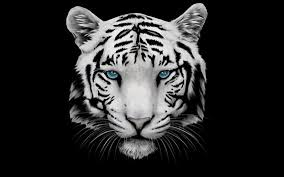 White Tiger Wallpaper APK Download Free Personalization APP for