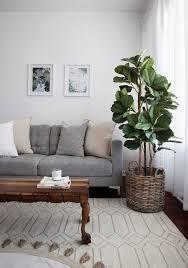 jungle das sind die trendpflanzen 2021 sense of