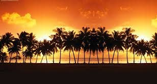 Free Palm Trees Landscape Backgrounds For PowerPoint