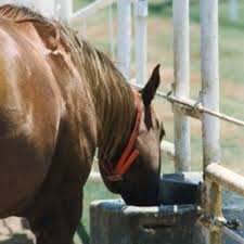 Horse Water Trough Bathtub by Tend To Water Troughs To Keep Your Horse Drinking Expert Advice