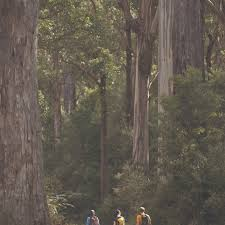 100 Lerderderg State Park Upper Chadwick Campground Free Camping Victoria Campsite Listings