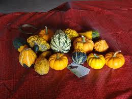 Hillcrest Farms Pumpkin Patch by Pumpkin Patch Hillview Stables