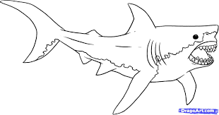 Clip Art Great White Shark Coloring Page Breadedcat Free For