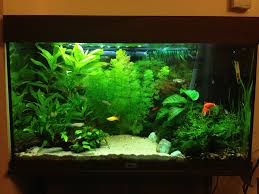 The World's Best Photos Of 125 And Aquascape - Flickr Hive Mind Hamsa Wabikusa Style Aquascaping World Forum Httpwww Nature Aquarium And Aquascaping Wiki 25l Nano Capa 2011 French Aquascapers Results My Scape Iaplc Rank 70 The Passing Of Legend Takashi Amano Magazine With Nicolas Guillermin Surreal Submarine Amuse Aquascape The Month August 2010 Beyond Riccardia Chamedryfolia Question This Is Ada 2009 Susanna Aquascape Garden Bonsai Plants