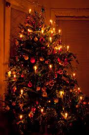 Christmas Tree Lane Ceres Ca by Panoramio Photo Of Christmas Poinsettia Tree Christmas Ideas