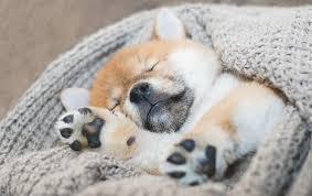 welpe jault nachts so helfen sie ihrem welpen durchzuschlafen