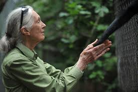 British Anthropologist And Primatologist Jane Goodall Takes The Hand Of A Spider Monkey During Her Visit