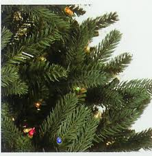 Silvertip Fir Christmas Tree by 7 5 U0027 Slim Fresh Cut Carolina Frasier Artificial Christmas Tree