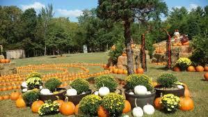 Pumpkin Patch Denver Botanic Gardens by 13 Charming Pumpkin Patches Near Washington Dc