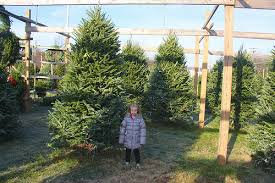 Christmas Tree Baler by Buying A Christmas Tree American In Spain