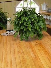 Pot Plants For The Bathroom by How To Care For Ferns Hgtv