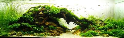 Nature Style | Aquascapeizm Aquascaping Nature Aquariums Of Zoobotanica 2013 Youtube Aquascape The Month November 2009 Riverbank Aquascaping Style Part 5 Roots By Papanikolas Nikos Awards Aquascapes Lab Tutorial River Bottom Natural Aquarium Plants The Planted Tank 40 Gallon Aquarium Everything About Incredible Undwater Art Cube Tanks Aquariums Dutch Vs How To A Low Tech Part 1