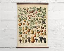 Vintage Fruit Larousse Natural History Kitchen Decor Canvas Poster Print Wooden Wall Chart Sizes A3 A2