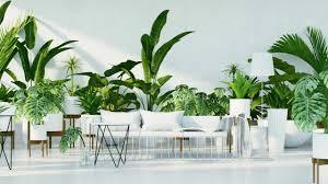 8 große und pflegeleichte zimmerpflanzen pflanzen für ihr