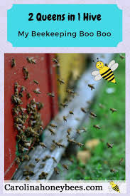 794 Best Bees Images On Pinterest | Bee Keeping, Honey Bees And ... How To Keep Bees A Beginners Guide Bkeeping Deter And Wasps And Identify Which Is Family 2367 Best Homestead Animals Images On Pinterest Poultry Raising Best Bee Hives Images Photo Wonderful To Away Become A Backyard Bkeeper Fixcom Why Your Child Needs Working Bee Urban Honey Back Yard Made Simple Image On Marvellous 301 Keeping Bees 794 The Complete 7step Chickens In Plants That Simplemost