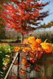 Pumpkin Farms Toms River Nj by 463 Best Mice In My Pumpkin Patch Images On Pinterest