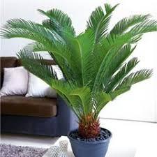 plantes vertes d interieur les extravagantes conseils plantes vertes d intérieur truffaut