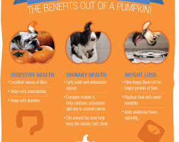 Organic Pumpkin For Dogs Diarrhea by Homemade Dog Treats U2013 The Healthy Dog Blog