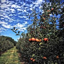 Apple And Pumpkin Picking Maryland by 46 Best Pick Your Own Images On Pinterest Orchards Farms And