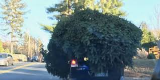 Christmas Tree Shop No Dartmouth Ma by Sudbury Police Pull Over Driver Transporting Oversized Christmas