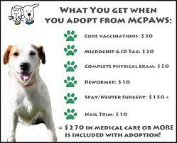adopt a cat mcpaws regional animal shelter adopt
