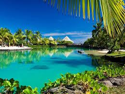 Beaches Beach Palm Nature Tropical Trees Wallpaper Iphone for HD